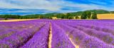 Lavender field - 165855030