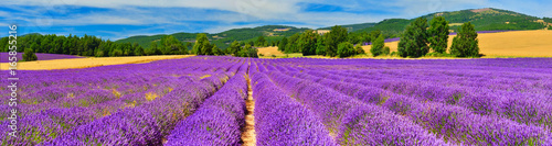 Foto op Canvas Panoramafoto s Panorama of lavender field