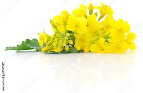 Fototapeta Mustard Flower blossom.