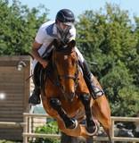 cheval au saut d'obstacles