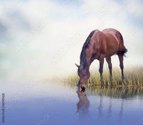 Brown horse drinking water