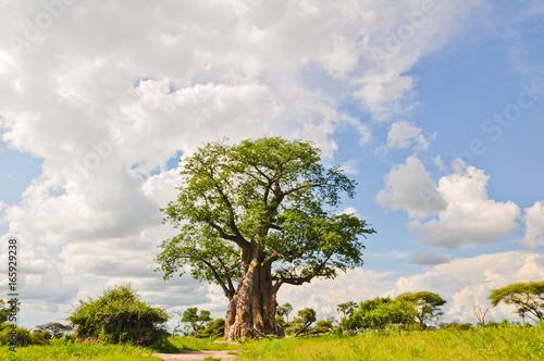 Deurstickers Baobab Baobab Tree