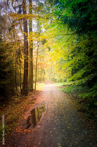 Tuinposter Grijze traf. Amazing autumn in the forest in Europe