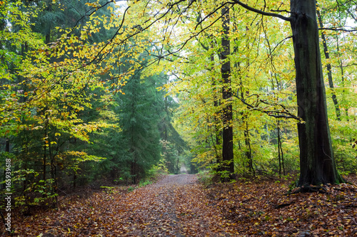 Beautiful forest in the autumn in Poland