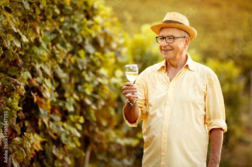 Fotobehang Planten Male vintner harvest wine in vineyard.