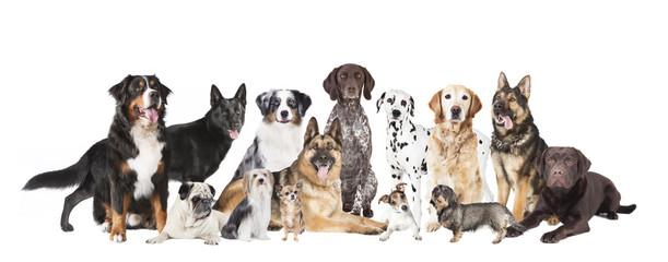 alle Hunde freigestellt