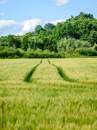 tractor tracks in crop field