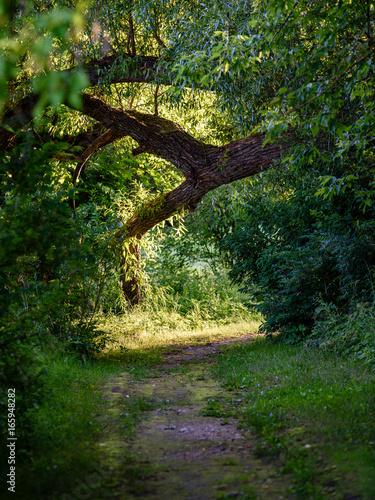 dark gravel pathway road in evening forest