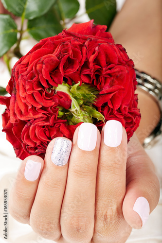 Hand with short manicured nails colored with white nail polish and red rose flower