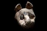egyptian mummy cat found inside tomb - 165987477