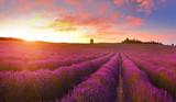 Lavender field - 166020040
