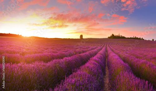 Papiers peints Lavande Lavender field