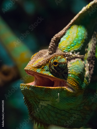 Chameleon Closeup Face in Spotlight