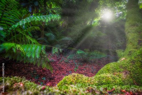 pół tropikalny krajobraz z lasem i paprociami