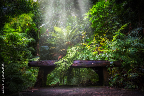 Fototapeta semi tropical landscape with woods and ferns