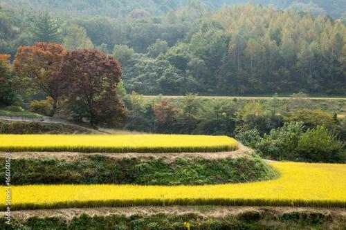Fotobehang 산골짜기의 가을 풍경