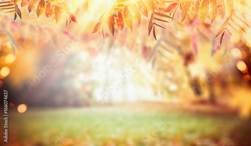 Autumn nature background with colorful fall foliage, pasture and sunbeams