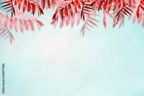 Beautiful autumn background with red foliage at sky background. Fall trees leaves border
