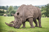 rhino - 166084695