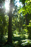 Sonniger Wald in Schleswig-Holstein, Deutschland
