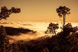 Zachód słońca nad chmurami z sosny kanaryjskiej, Teneryfa