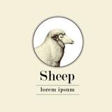 sheep, logo template, vector hand drawn illustration. - 166121096