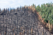 Damage from the Lightner Creek wildfire in Durango, Colorado