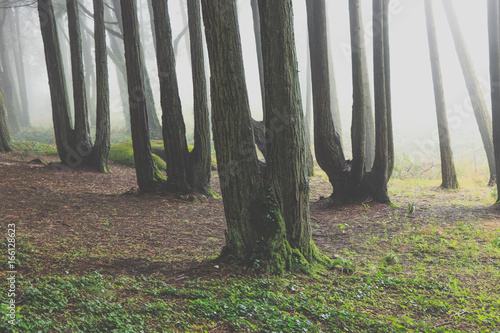 Foto op Aluminium Betoverde Bos Mysterious dark old forest with fog in the Sintra mountains in Portugal