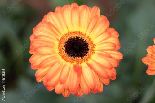 Bright yellow and orange flower