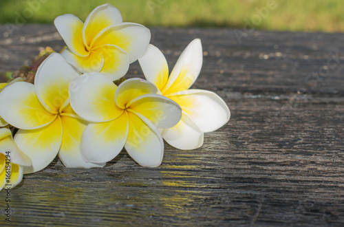 a bouquet of white tropical flowers plumeria on a dark background