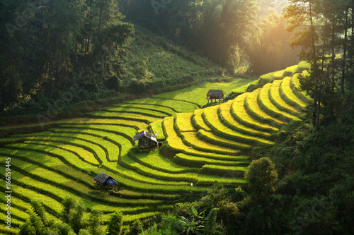 Fotobehang Rijstvelden Vietnam beautiful landscape rice terrace view in wild