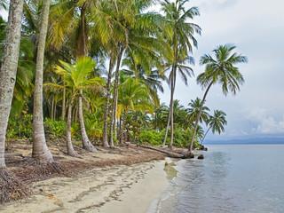 Panama carribian beach with palm trees
