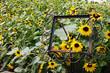 Quadro Sunflower Jadin