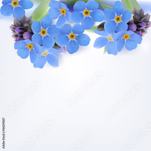 Wall mural Forget-me-not. Vector Background.