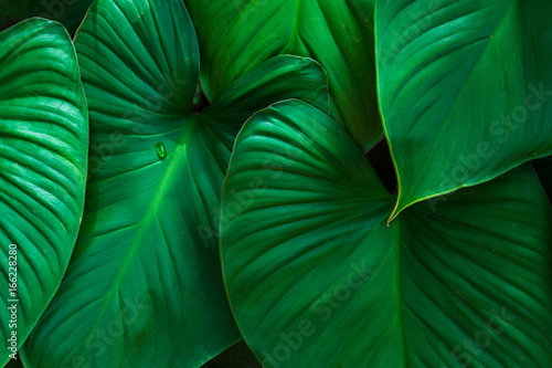 natural green background,green nature foliage texture,evergreen forest plants wallpaper