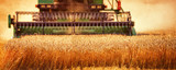 Harvesting Wheat - 166236401