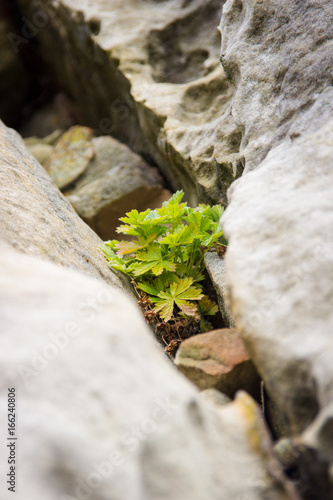 Hope - plant grows between rocks Poster