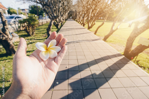 Plumeria flower on hand at Plumeria tunnels in Nan province of northern part of Thailand.