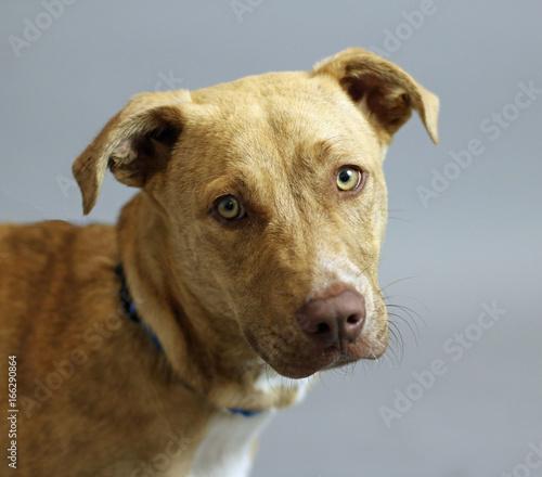 large dog face with big eyes