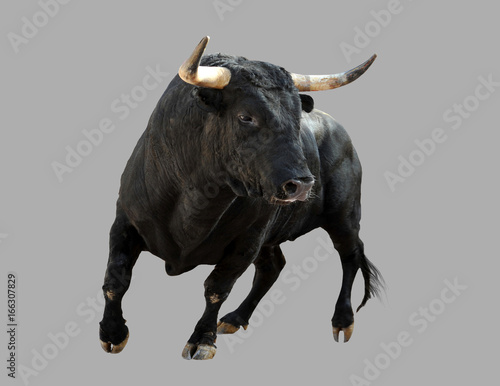 Black bull on a gray background.