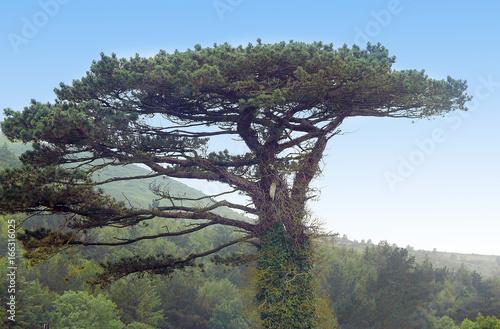 Baum auf der Isle of Man