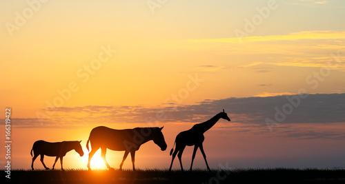 Foto op Aluminium Oranje Safari sunset landscape