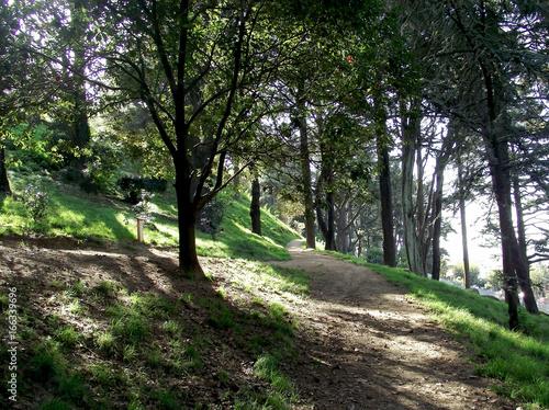 Foto op Canvas Weg in bos Árboles y arbustos en el jardín del parque forestal