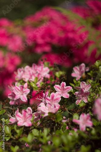 kwiaty w ogrodzie z tłem bokeh