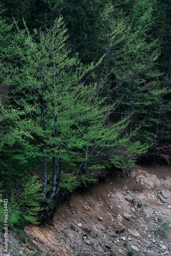 Foto op Canvas Weg in bos sosny