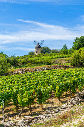 Vineyard and Windmill of Santenay, France