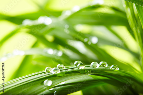Papiers peints Herbe water drops on the green grass
