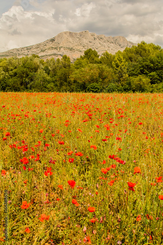 Field of poppies in front of the Sainte-Victoire mountain, near Aix-en-Provence