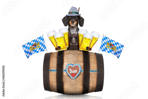 Foto op Aluminium Crazy dog bavarian beer barrel