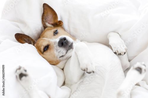 sick ill or sleeping dog